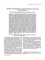 Synthesis and expression of laminin during human foetal lung development.
