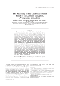 The Anatomy of the Gastrointestinal Tract of the African Lungfish  Protopterus annectens.
