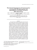 The Facial Integument of Centrosaurine CeratopsidsMorphological and Histological Correlates of Novel Skin Structures.