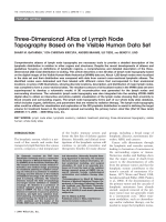 Three-dimensional atlas of lymph node topography based on the visible human data set.