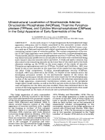 Ultrastructural localization of nicotinamide adenine dinucleotide phosphatase (NADPase)  thiamine pyrophosphatase (TPPase)  and cytidine monophosphatase (CMPase) in the Golgi apparatus of early spermatids of the rat.