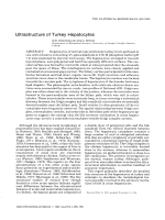 Ultrastructure of turkey hepatocytes.