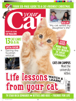 Your Cat - December 2017